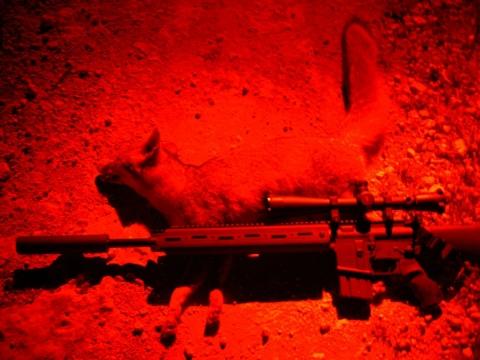 GAP 223 AR, Varmit Machine | Hunting